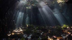 Ljus och mörker i mangroveskog stock video