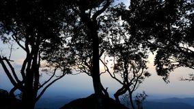 Ljus och mörkret av träd Royaltyfri Bild