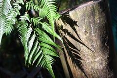 Ljus och skugga av härliga gröna Fern Leaves i trädgården L arkivfoton