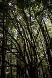 Ljus och skuggor i en skog Arkivfoto