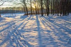 Ljus och skuggor i skog Fotografering för Bildbyråer