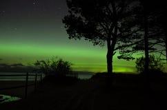 Ljus och träd för norrsken polara Royaltyfri Foto