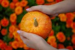 Ljus orange pumpa i händer royaltyfri fotografi