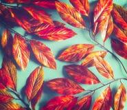 Ljus orange röd bakgrund för höstsidor på solig turkos Nedgångmodellorientering arkivfoto