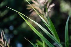 Ljus på gräs Arkivbild