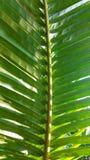 Ljus på kokosnötsidor Arkivfoton
