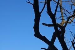 Ljus på mörker förgrena sig mot blå himmel royaltyfri foto
