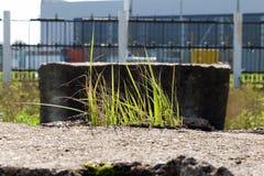 Ljus passerar till och med de gröna grässtråna som svänger i wina Fotografering för Bildbyråer