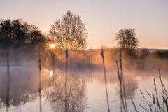 Ljus piercing för soluppgång till och med mist och träd och att reflektera in royaltyfria foton