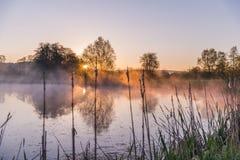 Ljus piercing för soluppgång till och med mist och träd och att reflektera in arkivbilder