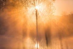 Ljus piercing för soluppgång till och med mist och träd och att reflektera in royaltyfri foto