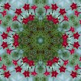 Ljus röd kardinal Vine Kaleidoscope royaltyfri fotografi