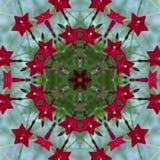 Ljus röd kardinal Vine Kaleidoscope 2 arkivfoton