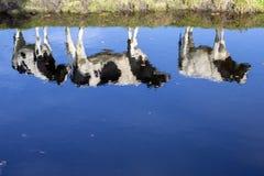 Ljus reflexion i vatten av tre unga kor som står på banken av ett damm royaltyfri fotografi