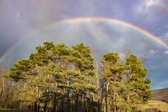 Ljus regnbåge över träd Fotografering för Bildbyråer