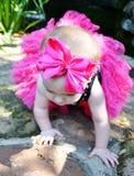 Ljus rosa färgpilbåge Royaltyfria Foton