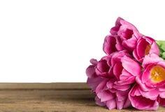 Ljus rosa tulpanbukett på bakgrund fotografering för bildbyråer