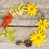Ljus rund sammansättning av gula blommor, rönnen, kottar och ekollonar på lantlig träbakgrund i höst Closup flatley squar royaltyfria bilder