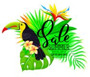 Ljus sammansättning för sommarförsäljning med tukanblommor och sidor Arkivbild