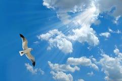 ljus seagull Arkivfoton