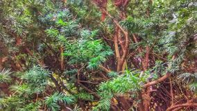 Ljus shinning för dag på en grön buske arkivbilder