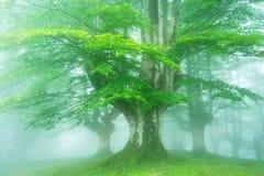 Ljus skog i vår royaltyfria bilder