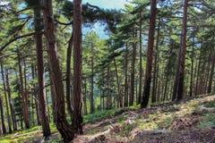 ljus skoggreen Arkivbilder