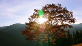 Ljus sol och guld- lövverk stock video