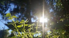 ljus solig closeupväxt av släkten Trifoliumdag Royaltyfria Foton