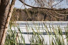 Ljus solig dag på det snöade dammet royaltyfri fotografi