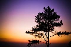Ljus solnedgång Arkivbild