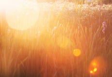 ljus solnedgång för gräs Arkivfoton