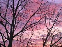 Ljus solnedgång och träd Fotografering för Bildbyråer