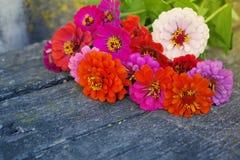 Ljus sommar blommar på en gammal träyttersida bakgrund blommar sommar Royaltyfri Fotografi
