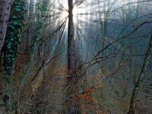 ljus stråle Arkivbilder