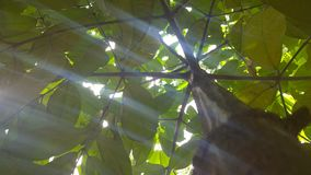 ljus sun Arkivfoton