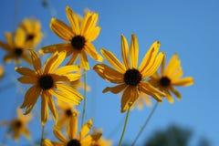 ljus sun för blommor Arkivfoton