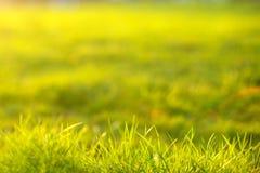 ljus sun under naturliga abstrakt bakgrunder Royaltyfria Foton