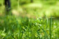 ljus sun under naturliga abstrakt bakgrunder Fotografering för Bildbyråer