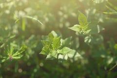 ljus sun under naturliga abstrakt bakgrunder Royaltyfri Fotografi
