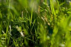 ljus sun under naturliga abstrakt bakgrunder Arkivbilder