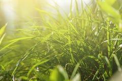 ljus sun under naturliga abstrakt bakgrunder Arkivbild