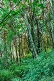 ljus till och med en tät skog Arkivfoto