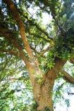 Ljus till och med trädet Arkivfoton