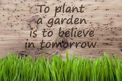 Ljus träbakgrund, Gras, citationsteckenväxtträdgård tror i morgon arkivfoto