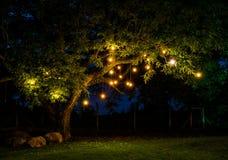 Ljus tree Arkivfoton