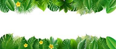 Ljus tropisk bakgrund med djungelväxter fotografering för bildbyråer