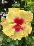 Ljus tropisk blomma Arkivfoton