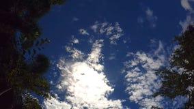 Ljus tropisk himmel, i ramen: fallande blad arkivfoton