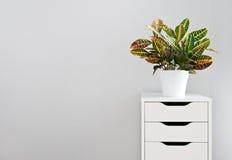 Ljus växt och vit enhetsbröstkorg Arkivfoto